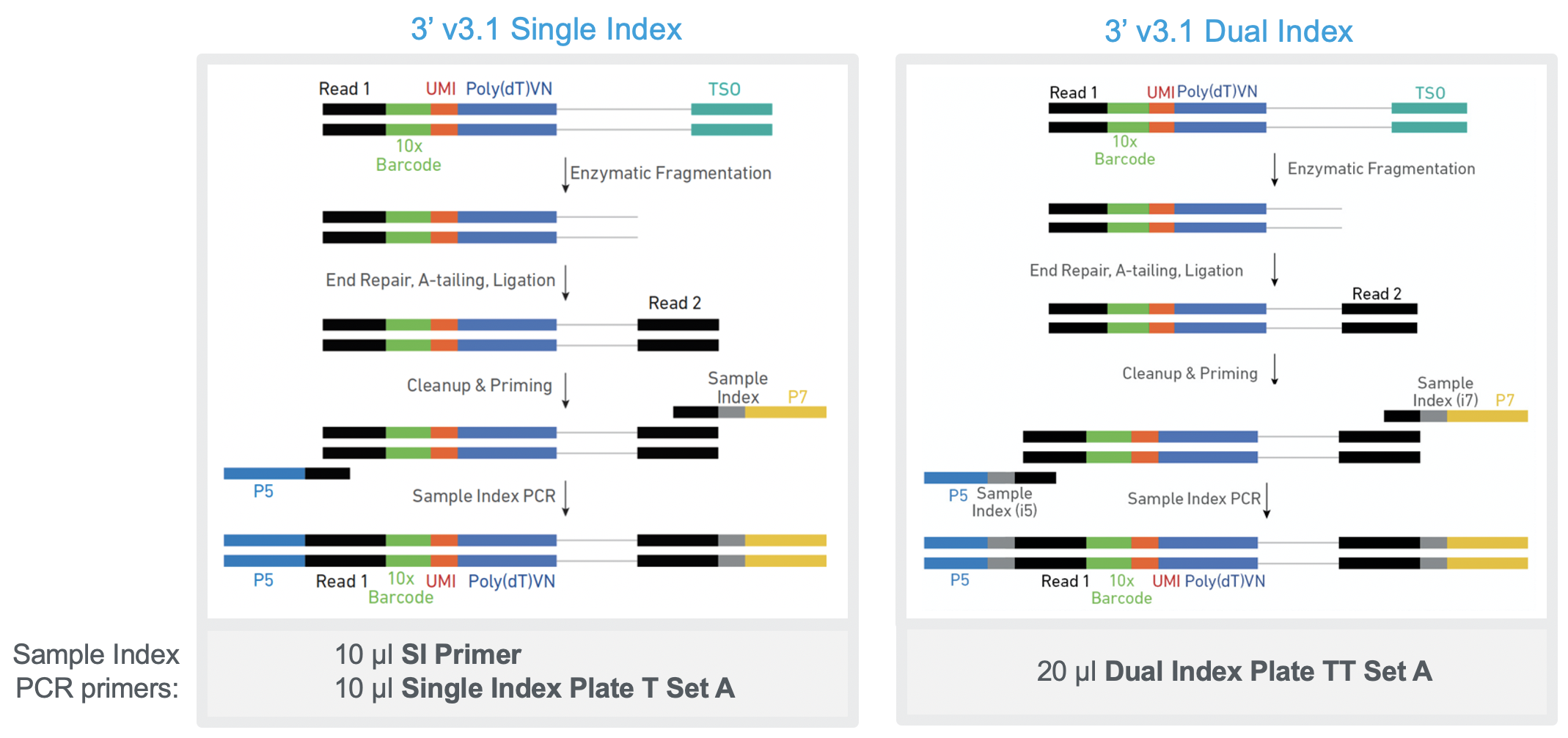 Gene_Expression_Single_Dual_index.png